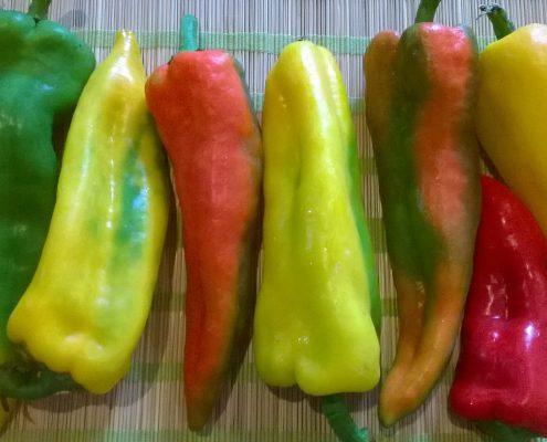 peperoni, fantasia di colori